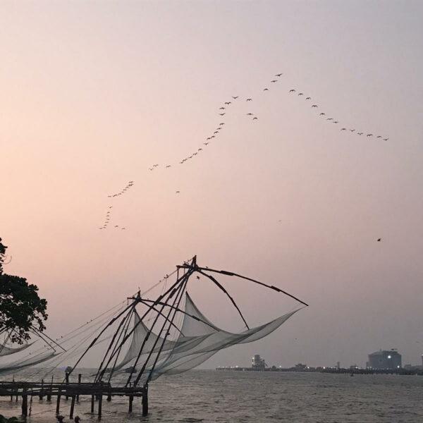 redes de pesca china gigantes con pájaros volando de fondo
