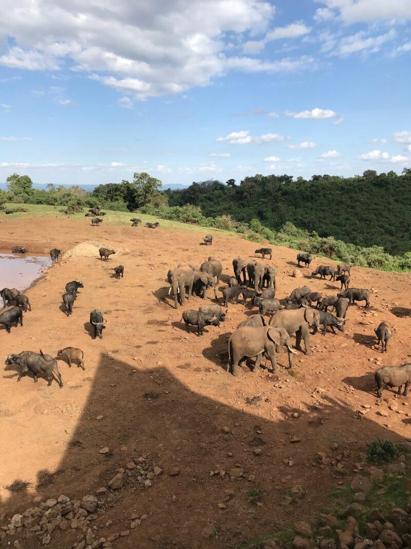 lago con muchos elefantes bebiendo alrededor
