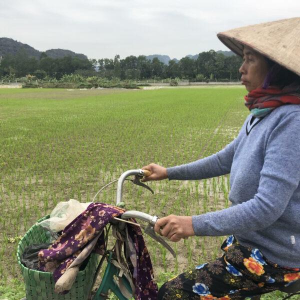arrozales en Tam Coc