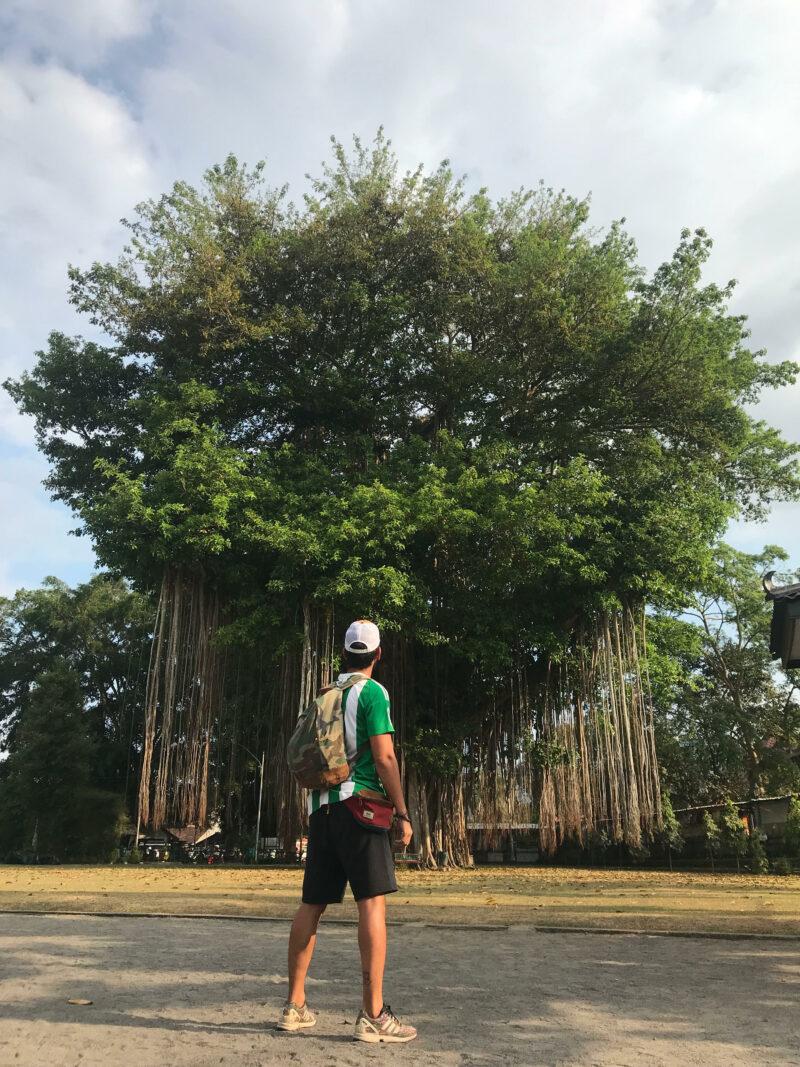 Árbol junto al templo de Mendut.